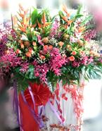 opening-flowers-17-btm