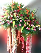opening-flowers-18-btm