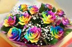rainbow-roses_btm